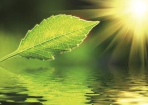 Blatt wird von der Sonne bestrahlt