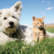 Hund mit Kätzchen in der Wiese