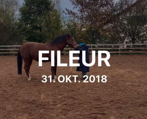 Fileur31.10.2018