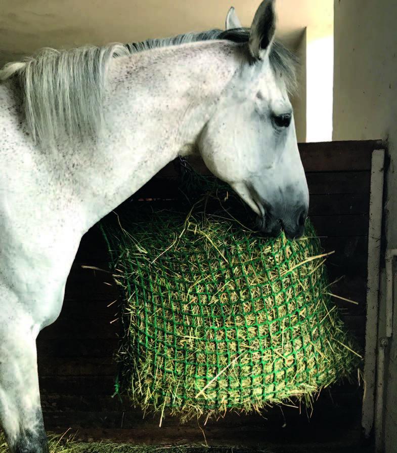 Das Pferd beißt in die Maschen und hebt das schwere Netz hoch.