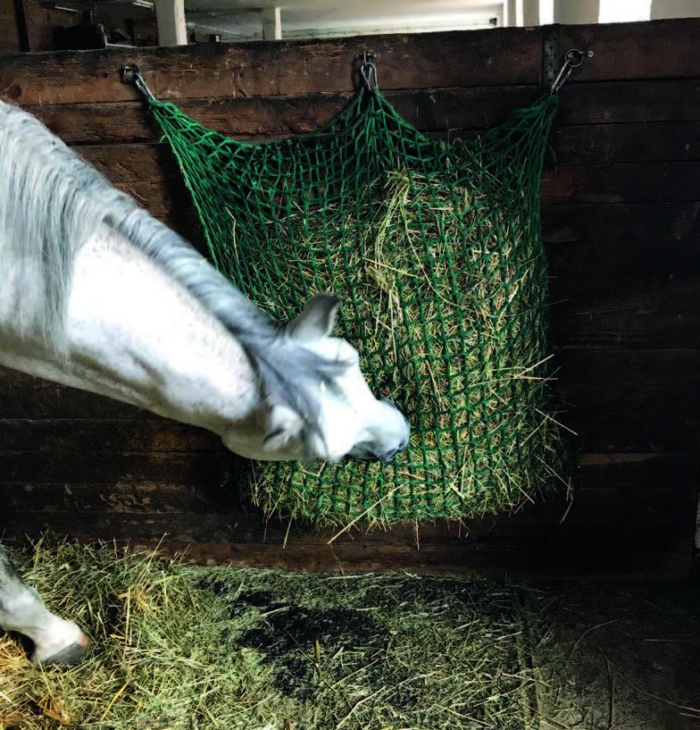 Das Pferd hält den Kopf beim Fressen schief.