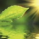 Blatt in der Sonne - Ausbildung zum/r Heilpraktiker/in Psychotherapie