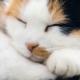 Energetische Heilweisen für Tiere