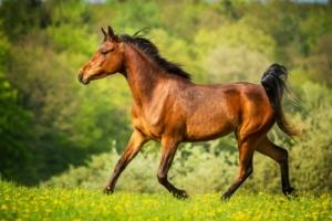 Gesundes Pferd durch manuelle Lymphdrainage