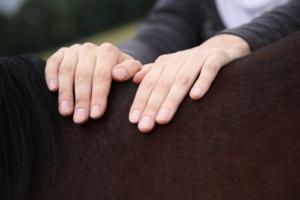 Osteopathische Techniken für die Pferdewirbelsäule