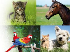 Katze, Pferd, Papageien, Hund