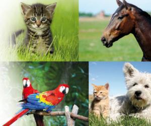 Ausbildung zum Tierheilpraktiker - Hund, Pferd, Katze und Vogel