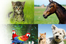Tierheilpraktiker In